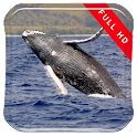 Whales in the Sea LWP icon