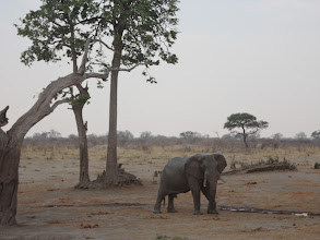 Photo: An elephant going in for a drink