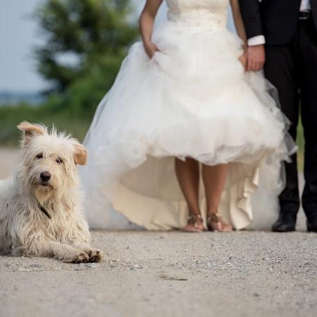 Fotograful de nuntă Iurasog Alexandru (iurasog). Fotografie la: 06.09.2016