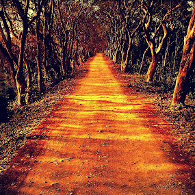 Way Through The Woods... by Sannit Hazra - Landscapes Forests ( lonely road, jungle safari, forest, kaziranga national park, road through the forest )
