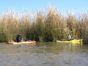 Photo: Really, there is a narrow sinuous water route through the impeneratable reeds.