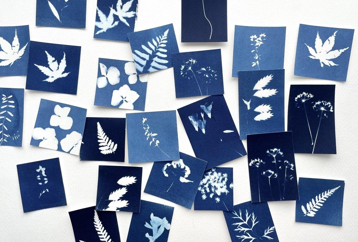 Botanical cyanotypes as cards.