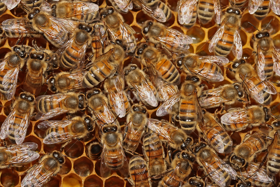 The hive by Scott Thompson - Nature Up Close Hives & Nests ( canon, hive, bees, mpe-65, honey )