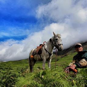 the horseman by Andrie Fery - Animals Horses ( animals, horseman, horse, bromo, animal )
