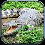 Life of Crocodile - Wild Sim Icon