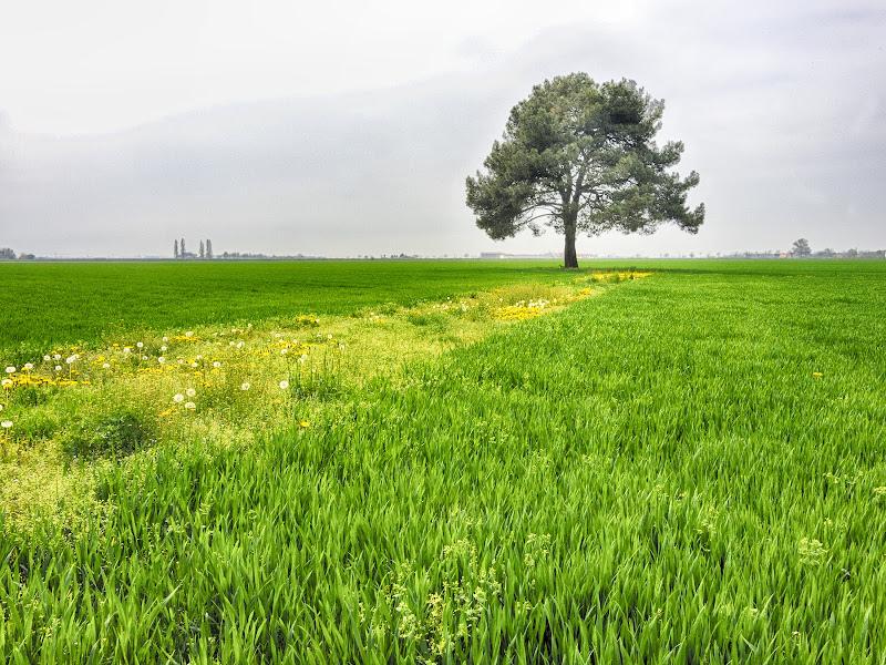 c'è un grande prato verde... di Moretti Riccardo
