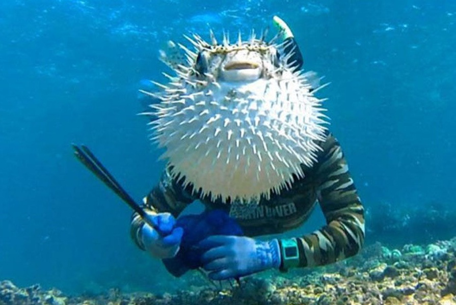 10. The puffer fish hides the men's face while he is clicking selfie