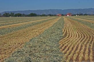 Photo: Farmland - West of Stonegate Basin - view of Coast Range