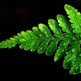 by Niney Azman - Nature Up Close Leaves & Grasses