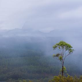 A Tree by Daniel Wheeler - Landscapes Weather ( sunshine coast, rain, tree, qld, glasshouse mountains )