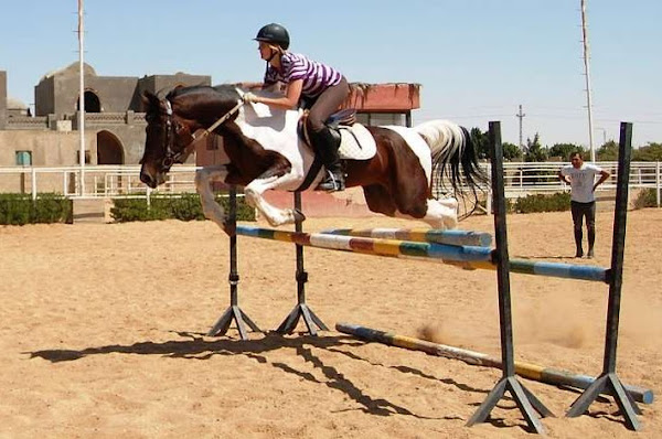 expat woman working abroad in cairo egypt with horses showjumping