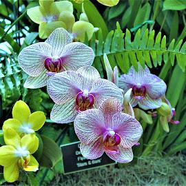 by Allen Wright - Flowers Flower Arangements