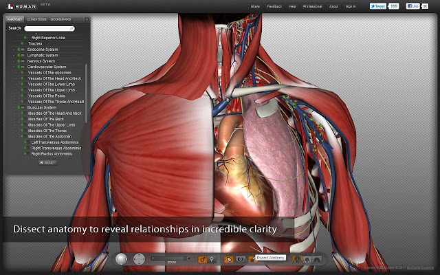 biodigital human - chrome web store, Muscles