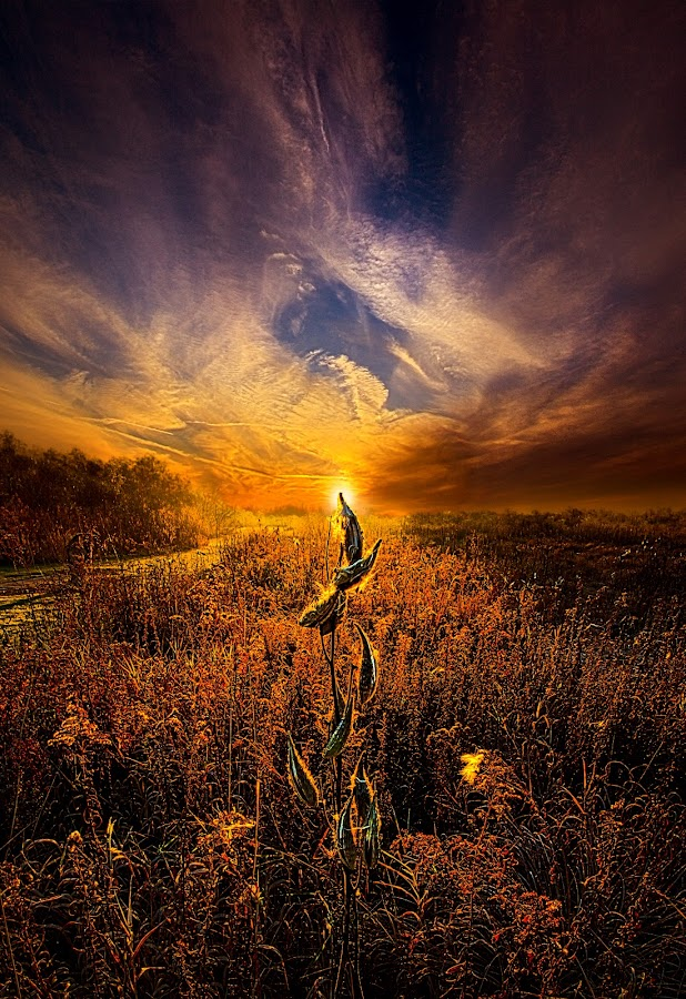 by Phil Koch - Landscapes Prairies, Meadows & Fields ( summer. spring, vertical, photograph, farmland, yellow, leaves, storm, love, nature, autumn, snow, flowers, flower, wind, orange, twilight, agriculture, horizon, portrait, environment, winter, season, national geographic, serene, floral, inspirational, wisconsin, natural light, phil koch, spring, sun, photography, farm, ice, horizons, rain, inspired, office, clouds, green, scenic, morning, wild flowers, field, red, blue, sunset, peace, fall, meadow, earth, sunrise, landscapes,  )