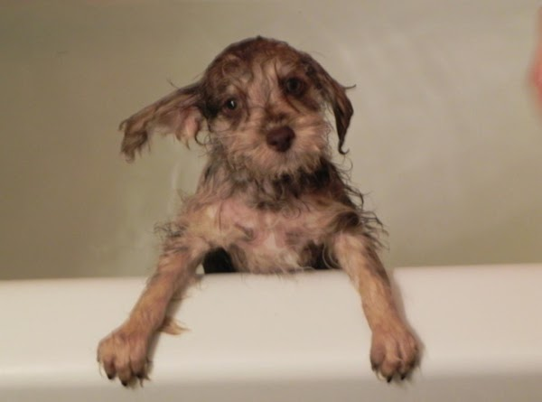 Paczki's first bath at home. He looks a little bewildered. hehe