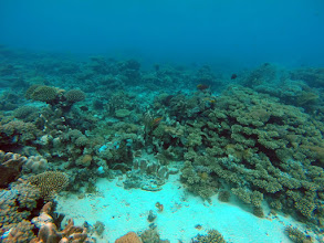 Photo: Rural coral reefs are often relatively undisturbed and often host intact and vibrant coral communities