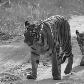 by Soham Chakraborty - Black & White Animals (  )