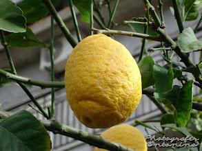 Photo: Limone biologico