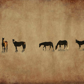 Horses resting by Gaylord Mink - Digital Art Animals ( resting, animals, digital art, horses )