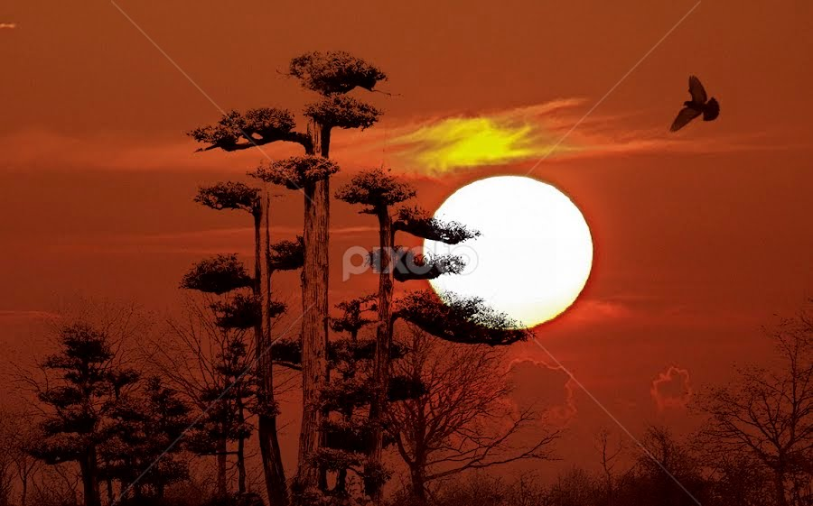 FL Sunset by Mark Turnau - Digital Art Places