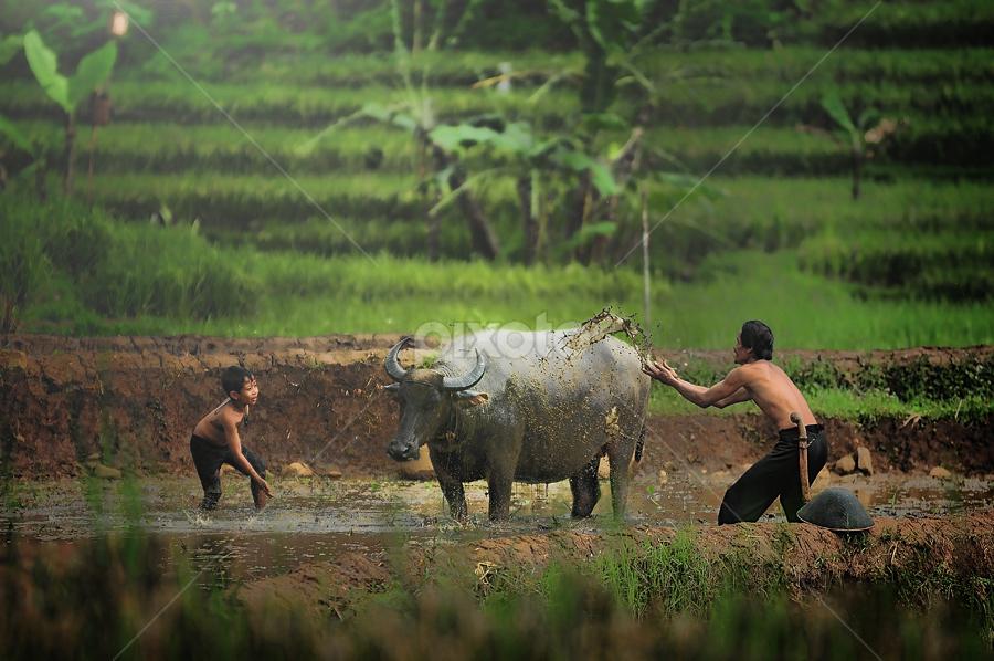 Buffalo shower by Iwan  Kristiana - People Family