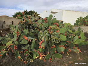Photo: Fuerteventura - kaktusy
