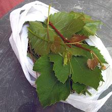 Photo: Liście, wąsy i młode pędy winogron (54)