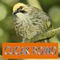 Master Kicau Cucak Rowo icon