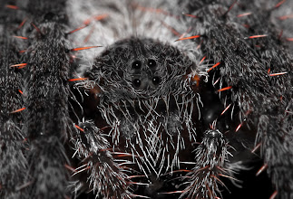Photo: Not so Cuddly Spider