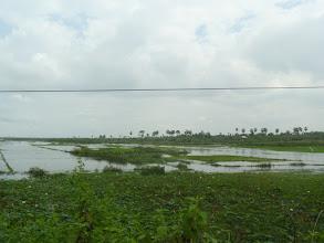 Photo: rice paddies