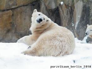 Photo: Gianna wirft einen kurzen Blick zu den Besuchern - Knut schaut derweil nach Gianna ;-)