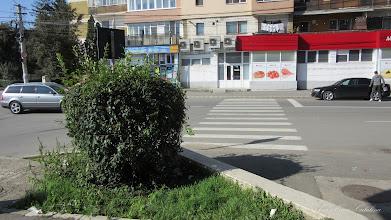 Photo: Str. Tineretului - Trecere de pietoni  spre spatiu verde. Boschet inalt in curba - 2015.10.03