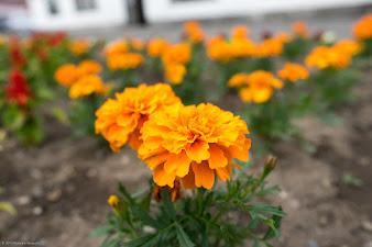 藤岡建設の庭に咲く花
