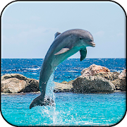Dolphin wallpapers hd backgrounds themes apps on google play dolphin wallpapers hd backgrounds themes voltagebd Gallery