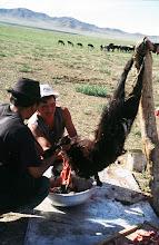 Photo: 03327 ナムジ家/ヤギ石焼料理準備/ボードック/首から下の皮を筒状に剥いだ中に解体した肉と焼石を詰めもどして、外側から火で焼く