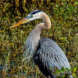 by Rob Whidden - Animals Birds