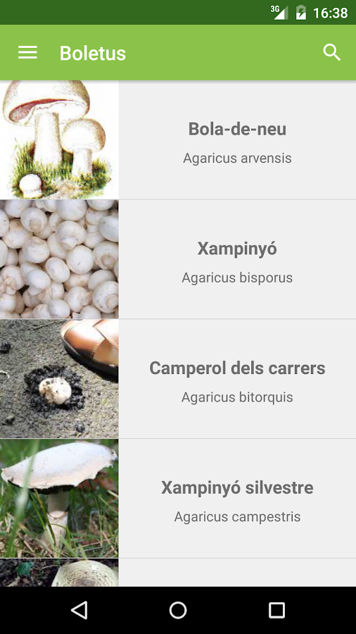 Boletus Lite - mushrooms- screenshot