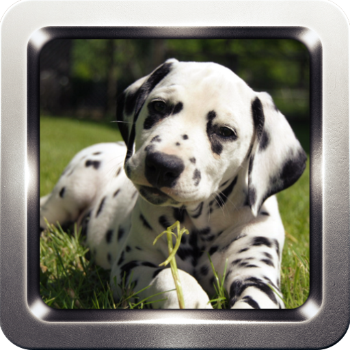 Dalmatian Dog Wallpapers 個人化 App LOGO-APP試玩