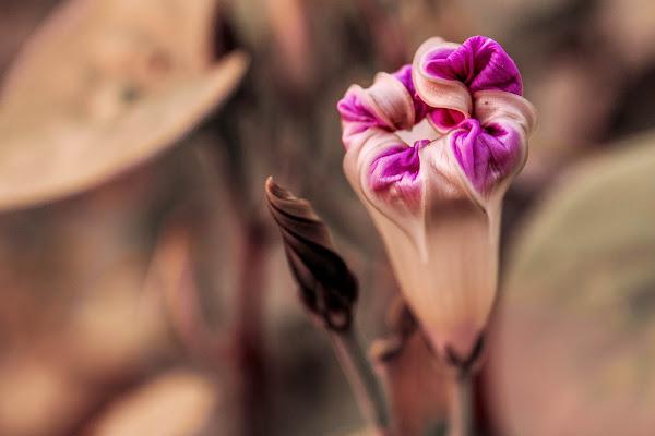 Curled petals di Giulia Breda