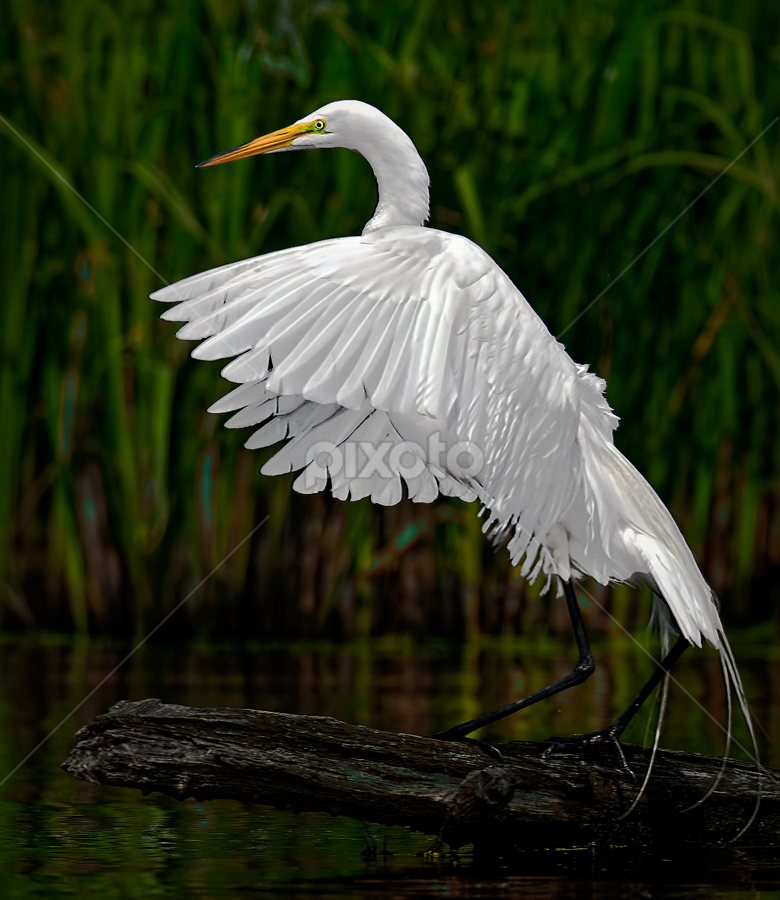 Fishing Action by Don Holland - Animals Birds