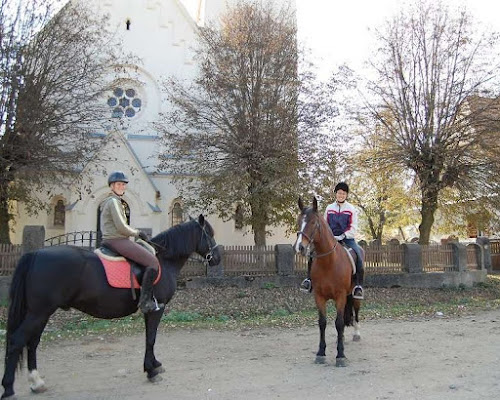 Working with Horses as a Trail Guide in Transylvania Romania