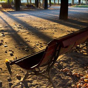 Park in Coimbra by Bim Bom - City,  Street & Park  City Parks ( coimbra portugal bench park leaves city sunset sun light beams trees )