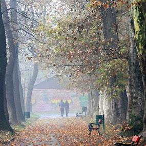 Autumn by Emil Chuchkov - City,  Street & Park  City Parks ( cuckove canon )