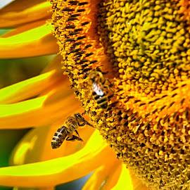 nectar time by Dr. Abhijit Mahanta - Nature Up Close Hives & Nests