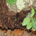 Leafy Brain