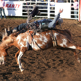 Laid Back by Justin Quinn - Sports & Fitness Rodeo/Bull Riding ( volleyball football, eugene pro rodeo 2016 )