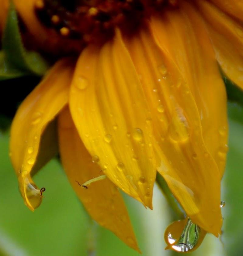 Lacrime di pioggia  di daniela pireddu