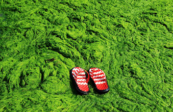 Photo: A pair of slippers is seen at an algae-filled coastline in Qingdao, Shandong province June 9, 2013. Picture taken June 9, 2013. REUTERS/China Daily (CHINA - Tags: ENVIRONMENT) CHINA OUT. NO COMMERCIAL OR EDITORIAL SALES IN CHINA