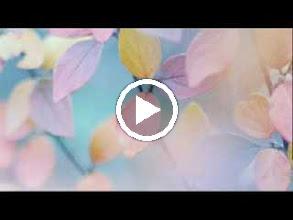 Video: Antonio Vivaldi  Ostro picta, armata spina [Introduction] in D major (RV 642) -