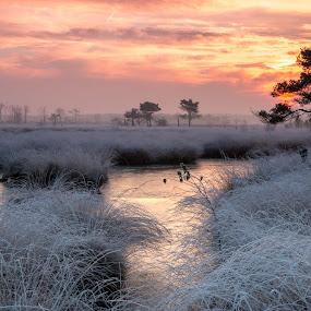 kalmthoutse heide by Twan Konings - Landscapes Sunsets & Sunrises ( water, rijp, red, winter, nature, grass, ice, trees, lake, sunrise, oranje )